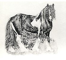 Gypsy Cob Horse Portrait Photographic Print