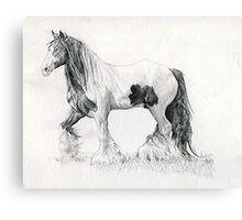 Gypsy Cob Horse Portrait Canvas Print