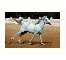 Arabian Joy Horse Portrait Art Print