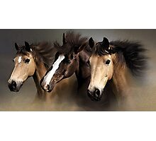 Equine Dreams Horse Portrait Photographic Print