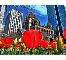 Boston in Bloom Photographic Print