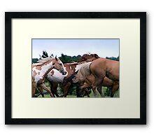Camouflage Paint Horse Portrait Framed Print