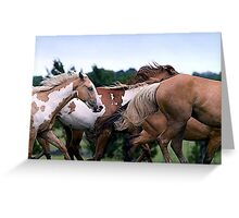 Camouflage Paint Horse Portrait Greeting Card