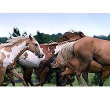 Camouflage Paint Horse Portrait Photographic Print