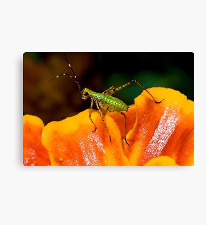 Favorite Colors Canvas Print
