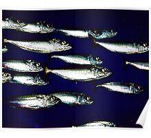 Sardines Poster
