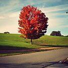 Autumn Alone by Jane Brack