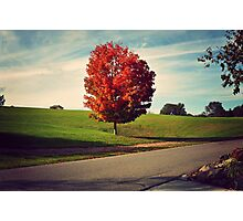 Autumn Alone Photographic Print