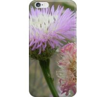 Old and New Star Thistle iPhone Case/Skin