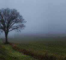Foggy Morn by Jigsawman