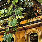 Shenandoah Valley Winery by Barbara  Brown