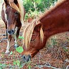 Wild Feral Horses-Two Of A Kind by Sandy O'Toole