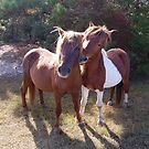 Wild Feral Horses-Playful Pals by Sandy O'Toole