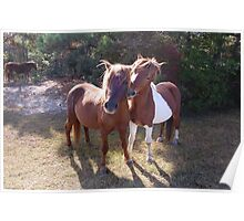 Wild Feral Horses-Playful Pals Poster