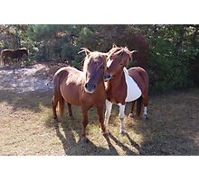 Wild Feral Horses-Playful Pals Photographic Print