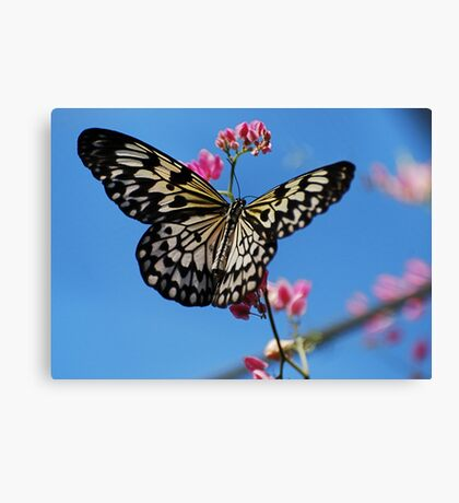 Paper Kite  Canvas Print