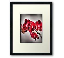 Orchids From A Friend Framed Print