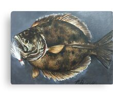 Summer FLounder Canvas Print