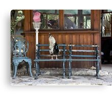 A Place To Roost Canvas Print