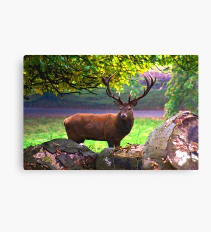 Stag #1   (Red Deer) Canvas Print