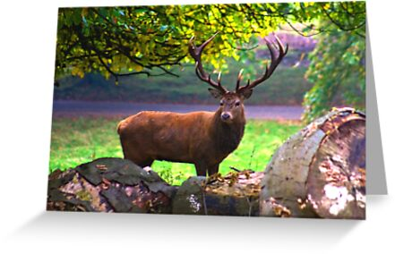 Stag #1   (Red Deer) by Trevor Kersley