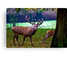 Stag #2   (Red Deer) Canvas Print
