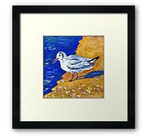 Seagull at the Baltic Sea Framed Print