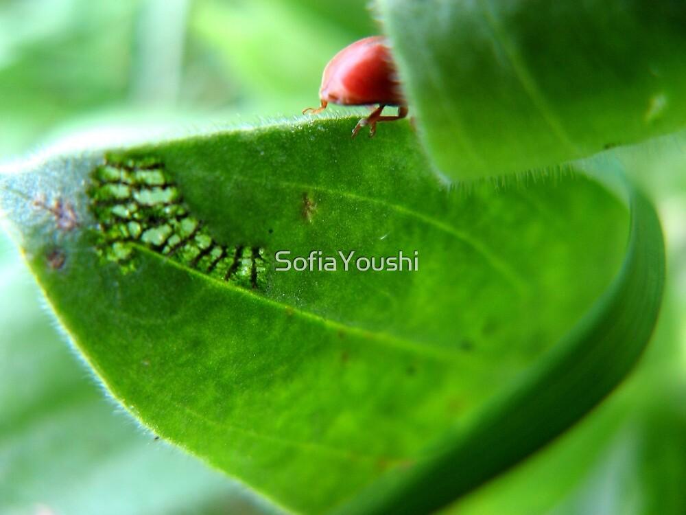 RED BUG GONE by SofiaYoushi