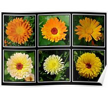 Marigold Collage Poster