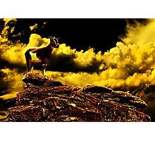 Crazy Goat Fine Art Print Photographic Print