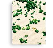 Sand dunes edge on the beach  Canvas Print