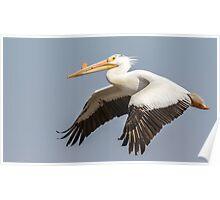 White Pelican 5-2015 Poster