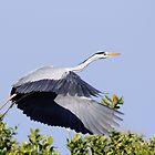 Heron take off, Parc Natural de l'Albufera, Valencia, Spain by Andrew Jones