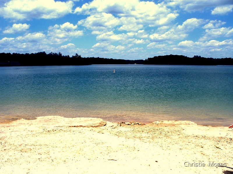 Holly Bay by Christie  Moses