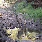 Reflections! Early morning at water hole. by Rita Blom
