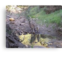 Reflections! Early morning at water hole. Metal Print