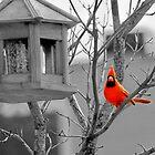 State Bird! by serendipity3