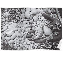 Seashell b&w Poster