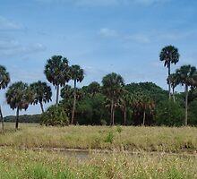 Slice Of Olde Florida by florene welebny