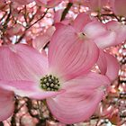 FAVORITE DOGWOOD Flowers Trees Calendar by BasleeArtPrints