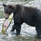 Grizzly Fishing Chum Salmon by zpaperboyz