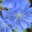 Blue by Kimberly Adams