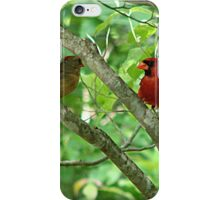 Northern Cardinal Pair - female and male iPhone Case/Skin