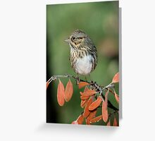 Lincoln's Sparrow Greeting Card
