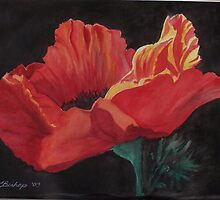Poppy by Carolyn Bishop