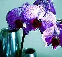 Pop orchids by Valeria Palombo