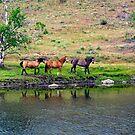 All My Pretty Little Horses by Bryan D. Spellman