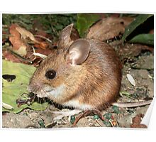 Wood Mouse (Apodemus sylvaticus) Poster