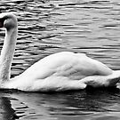 The Lonely Swan by Lyndy