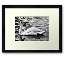 The Lonely Swan Framed Print